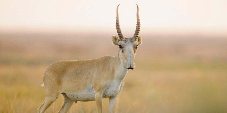 Çoğu insanın bilmediği bu 24 hayvanı görünce çok şaşıracaksınız