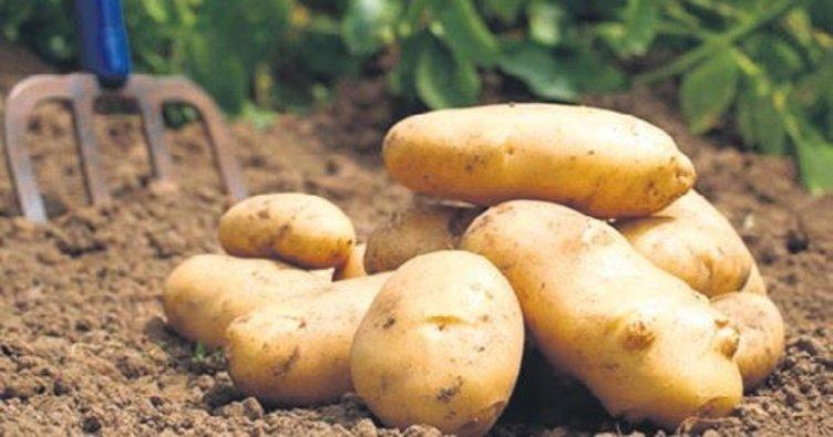 Patates 2 liraya geriledi