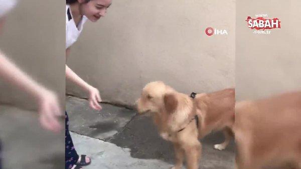 İzne gelen Mehmetçiğin köpeği ile gözleri yaşartan buluşması kamerada | Video