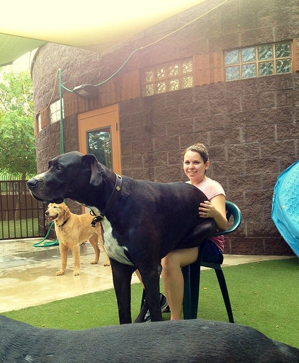 En büyük köpekler
