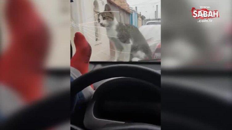 Kediyi korkutayım derken hayatının dersini aldı!