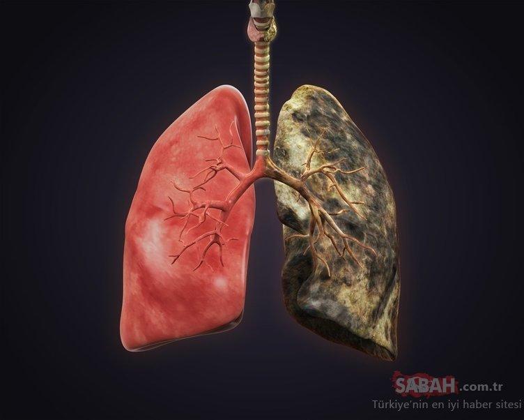 Akciğerleri temizlediği ortaya çıktı!
