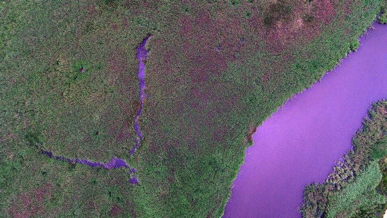 İğneada Longoz Ormanları'nda görsel şölen