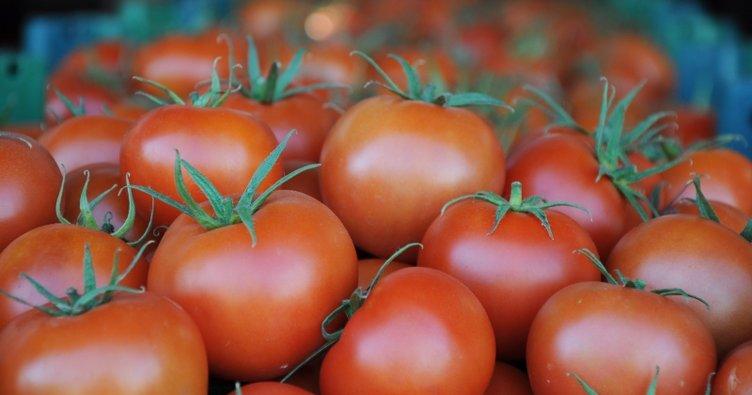 Rüyada domates görmek nasıl yorumlanır? Rüyada saksıda domates görmek, domates toplamak neye işarettir?
