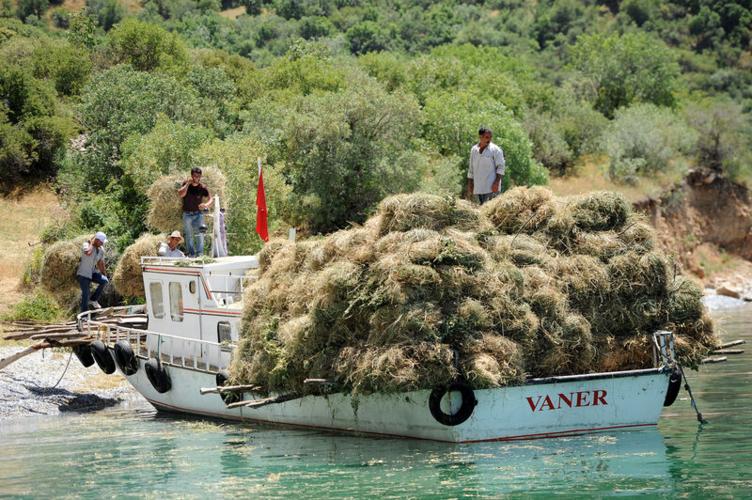 Balıkçı tekneleri ile ot taşıyorlar