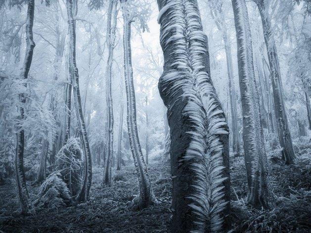 Gidip kaybolmak isteyeceğiniz 18 orman