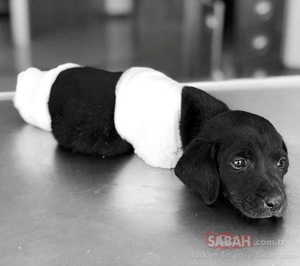 MHP lideri Devlet Bahçeli'den 'bacakları kesilerek öldürülen yavru köpek' açıklaması!