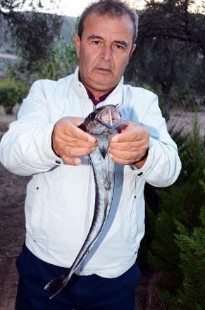 Türkiye'de ilk kez görüldü balıkçılar şoke oldu