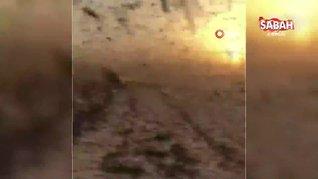 Suudi Arabistan'da çekirge istilası yaşandı   Video