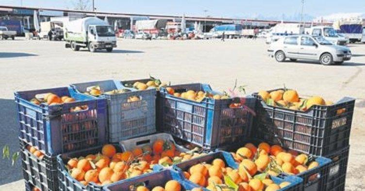 Narenciyede ihracat arttı