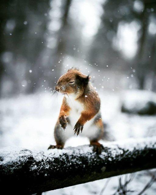 Ormandaki vahşi hayvanları model yaptı
