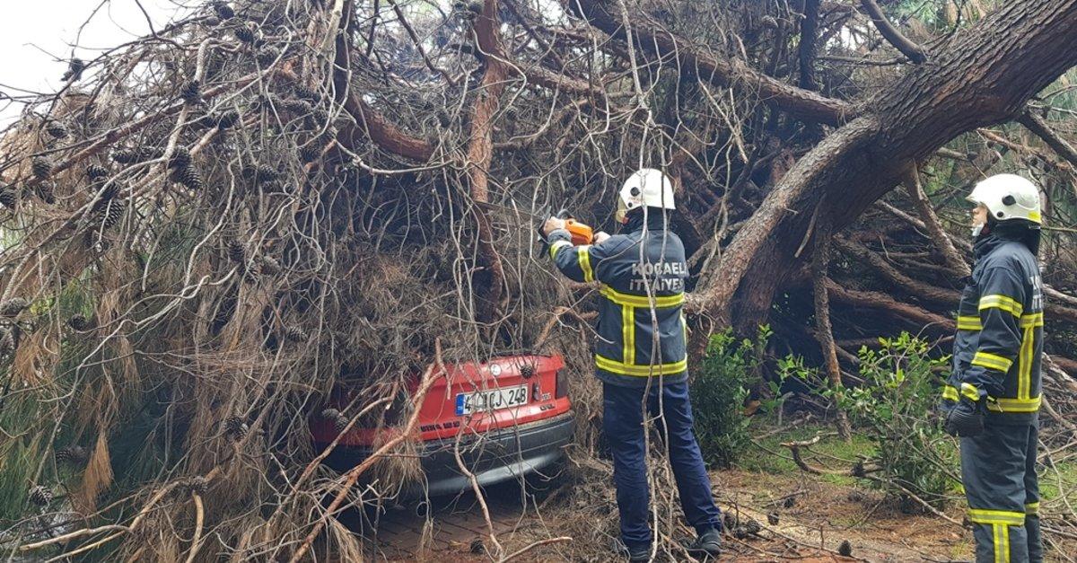 Otomobilin üzerine ağaç devrildi!
