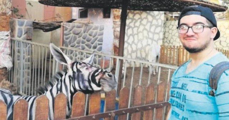 Eşeği zebra gibi boyadılar