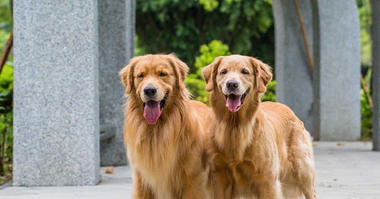 Rüyada köpek ısırması köpek saldırması ısırması ve kovalaması hakkında rüya yorumu: Rüyada köpek görmek ne anlama gelir?