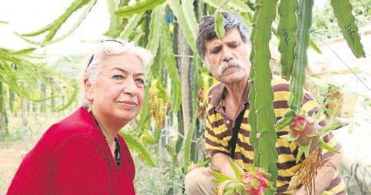 Emekli öğretmen çift tarımda örnek