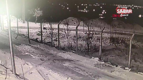 Erzincan'da yerleşim yerlerine kadar inen aç kurtlar kamerada | Video