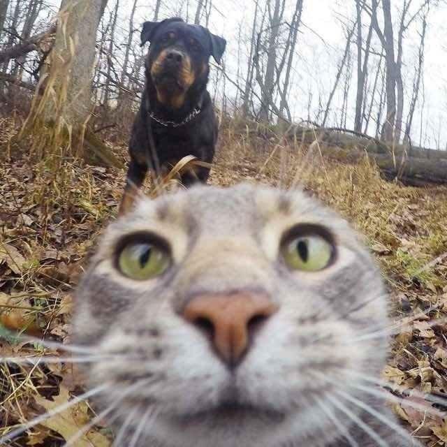 Selfie artık ondan soruluyor