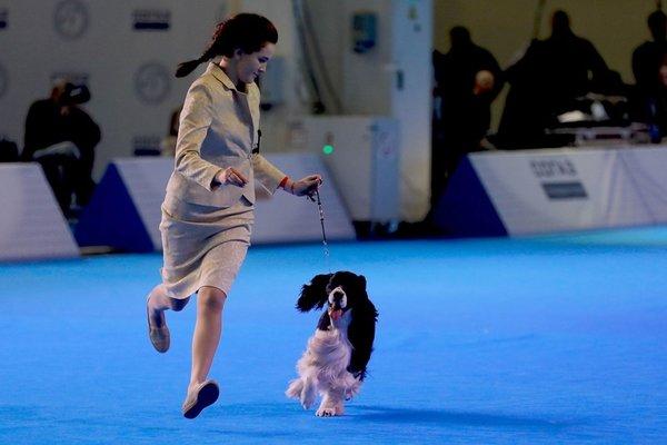 Rusya'da köpek fuarı