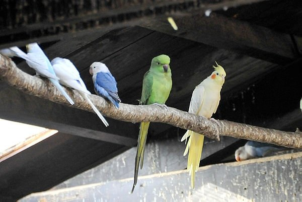 Yurda kaçak getirilen hayvanlar doğal hayata kavuştu