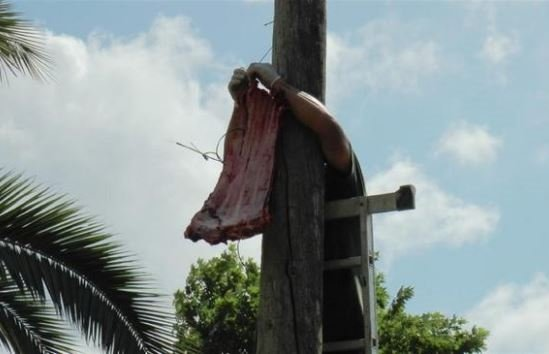Sibirya kaplanı asılan eti 6 metrelik direkten böyle aldı
