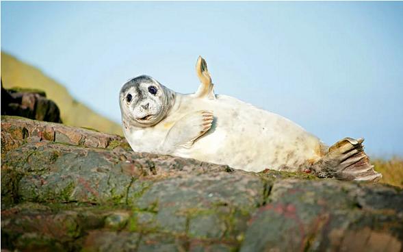 Vahşi doğadan 38 sevimli fotoğraf