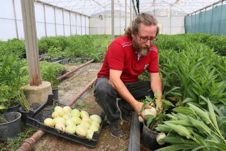 4 fidanla başladı, şimdi tonlarca pepino meyvesi üretiyor