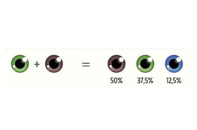 Bebeğinizin gözünün ne renk olacağını biliyor musunuz?
