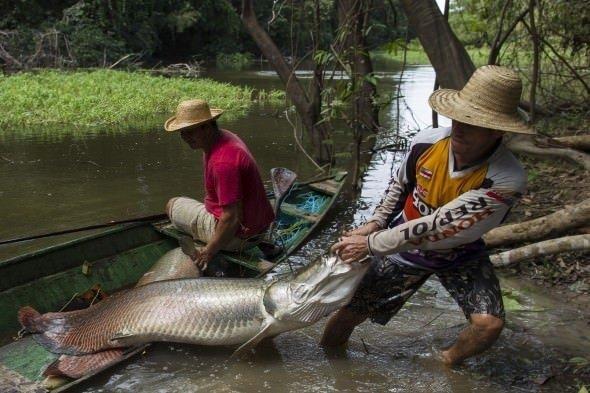 Aşırı avlanma kurbanı oldu