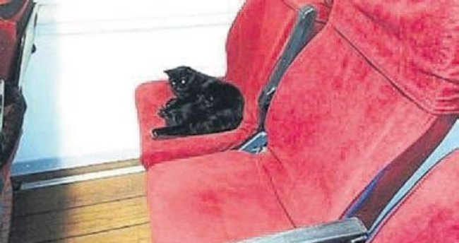 Kedi yavrularını gemide doğurdu