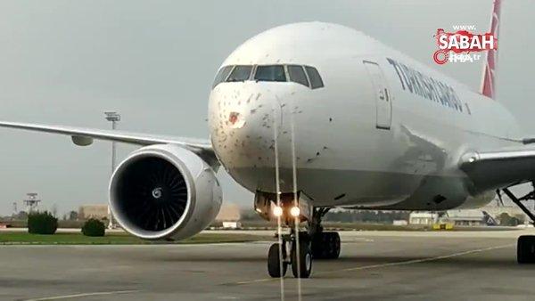 Kuş sürüsüne giren THY'nin kargo uçağı geri döndü | Video