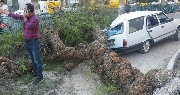Seyir halindeki araçların üzerine ağaç devrildi!