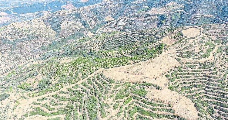 İzmir ve Manisa yeşillendi