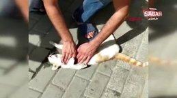 Otomobilin çarptığı kediyi kalp masajıyla böyle kurtarmaya çalıştı | Video