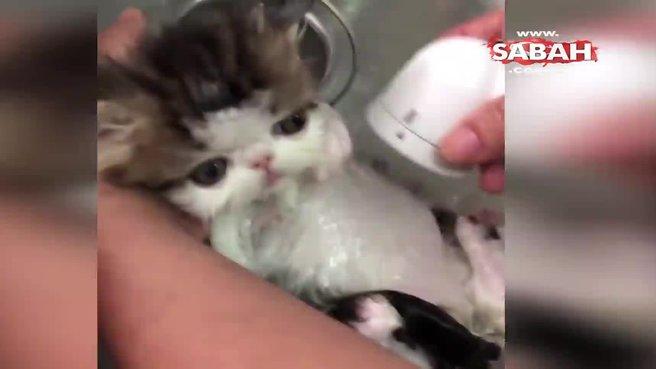 Hayvanlar Alemi Videoları Izle Web Tv Sabah