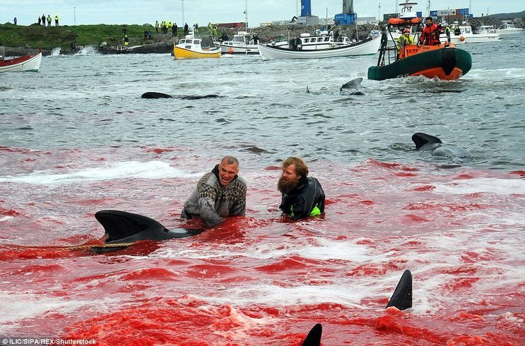 Vahşet! Deniz kırmızıya boyandı