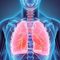 Akciğer enfeksiyonu nasıl temizlenir? Akciğer enfeksiyonu neden olur, nasıl geçer? 14