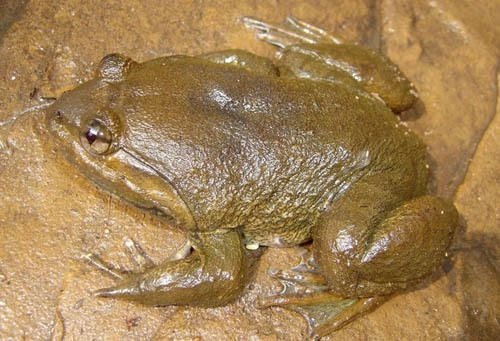 163 canlı türü bulundu