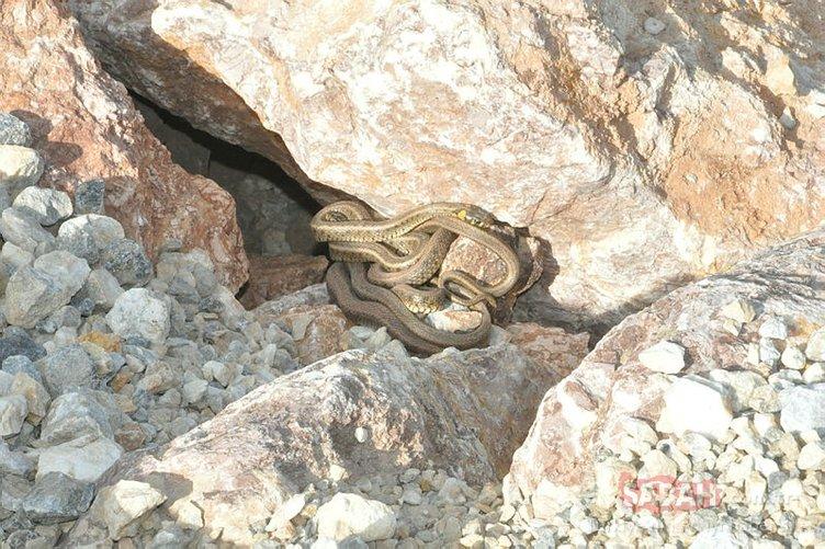 Yüksekova'da sürü halinde görülen yılanlar korkutuyor