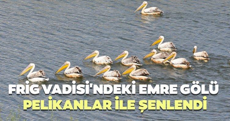 Frig Vadisi'ndeki Emre Gölü pelikanlar ile şenlendi